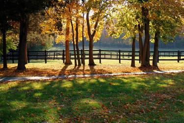 autumn dapples by elizile