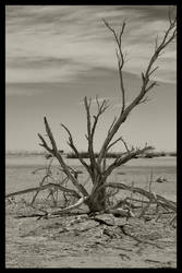 Salty Branches by kDAVR