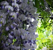 violet and sensitiv by Pumapranke