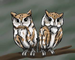 Screech Owls by ShakeablePanda