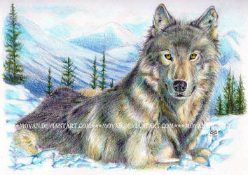 Predator - Wolf by moyan