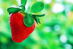 StrawberryIII by Haifona
