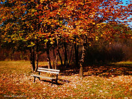 Autumn by n-0-n-a