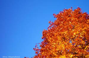 Autumn sky by n-0-n-a