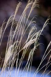 Winter Grass 7 by Art-Photo