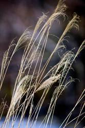 Winter Grass 8 by Art-Photo