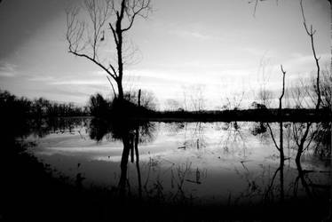 Bayou Sunrise 6 bw by Art-Photo