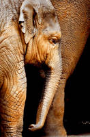 Elephant 7 by Art-Photo