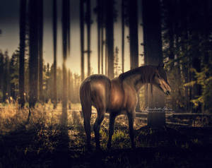 Alone by aeriiea