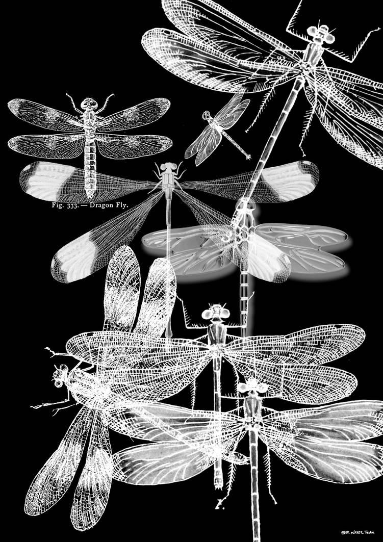 Dragonfly Photogram by DigitalSkeleton