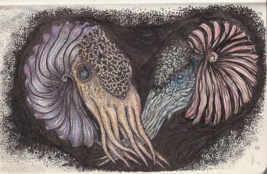 Ammonite Sketch Nr.3 by squidink