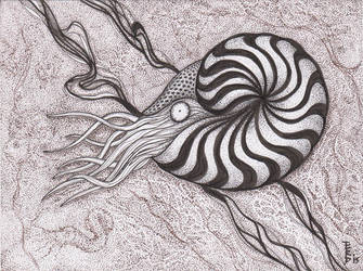 Variations on Ammonites #1 by squidink