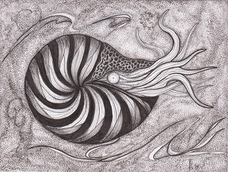 Variations on Ammonites #2 by squidink