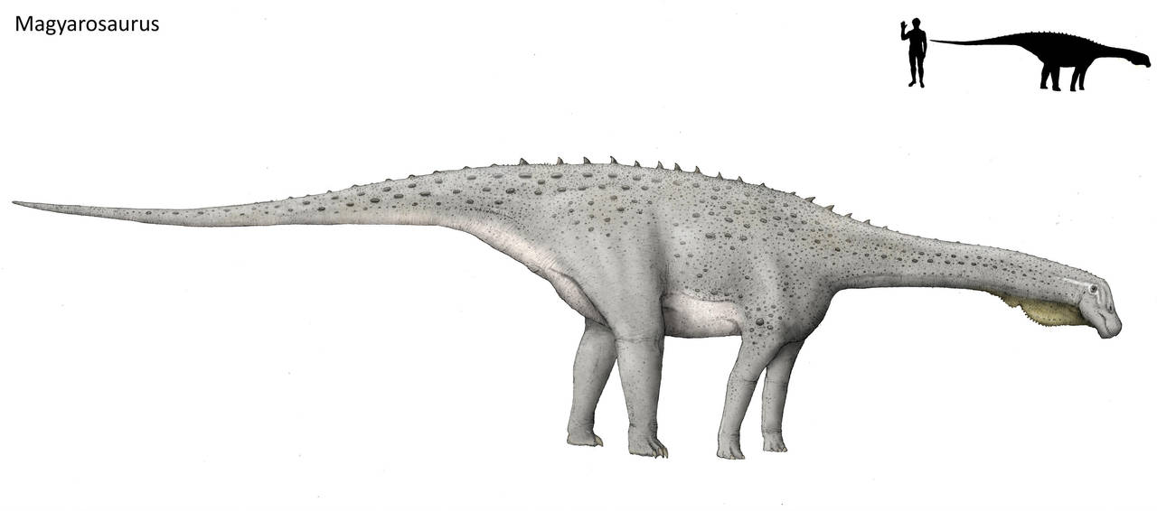 Magyarosaurus by Hyrotrioskjan