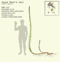 Giant Mare's tail by Hyrotrioskjan