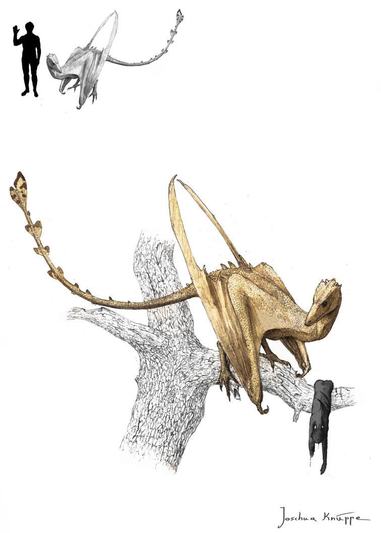 Afrorex hirsutocaude by Hyrotrioskjan
