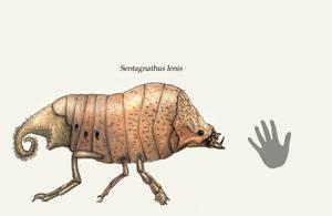 Sentagnathus by Hyrotrioskjan