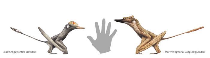 Wukongopterids by Hyrotrioskjan