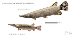 Messel gars by Hyrotrioskjan