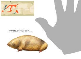 Neanen golden mole by Hyrotrioskjan