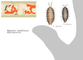 Ngamian woodlouses by Hyrotrioskjan