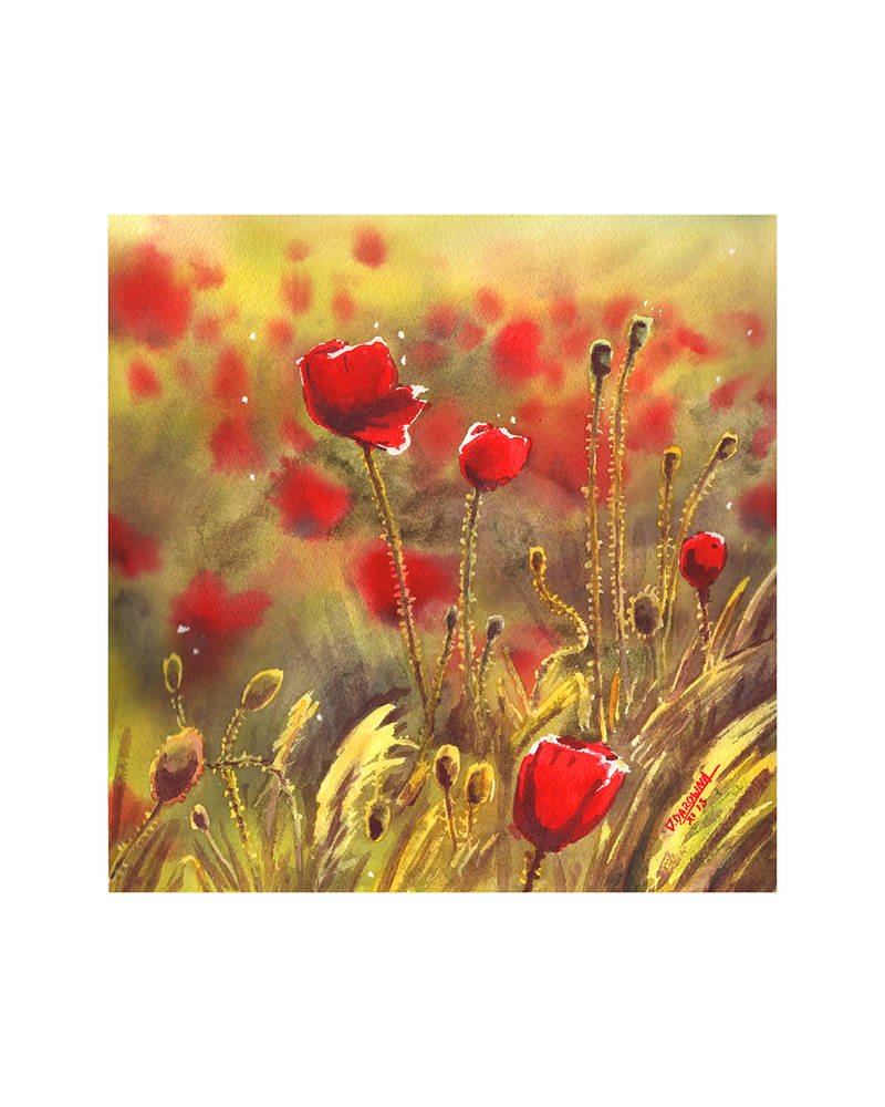 Poppies by doma22