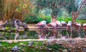 Pink Flamingos by Piddling