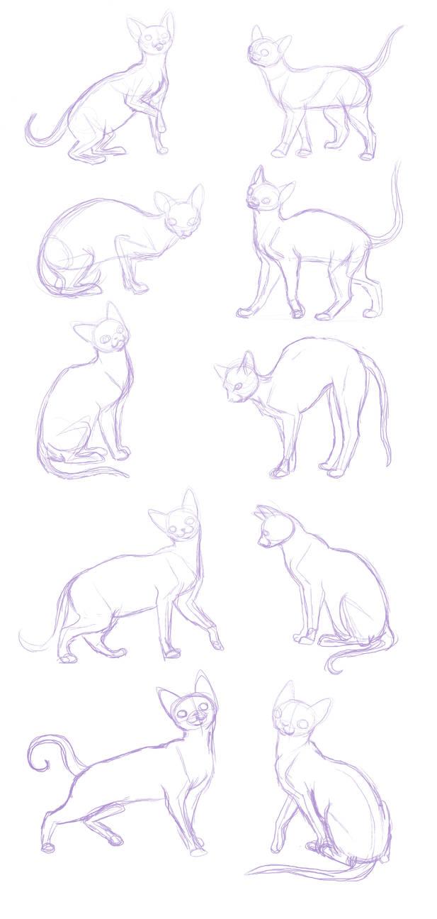 Cat Sketches Anatomy Practice By Bakamichi On Deviantart