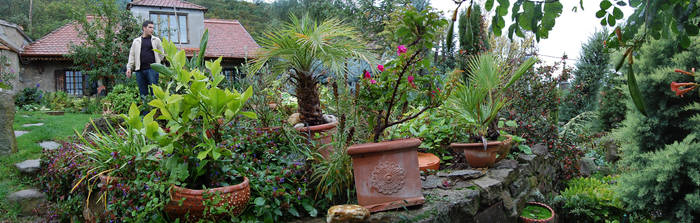 mgarden_pano2 by carbothronic