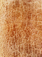 texture 126 by Sirius-sdz