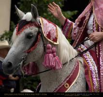 Arabian Parade HS by SalsolaStock