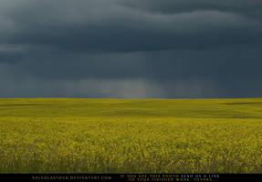 Canola Field 5 by SalsolaStock