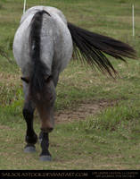 Bay Roan Yearling 4 by SalsolaStock