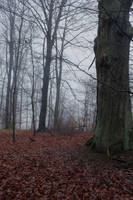 Foggy Forest 08 by sacral-stock
