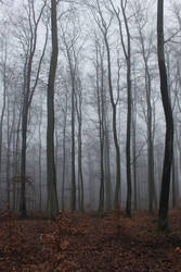 Foggy Forest 27 by sacral-stock