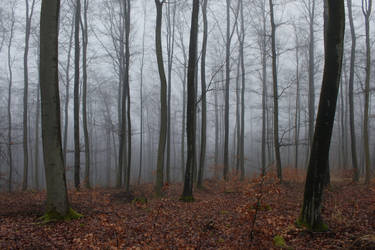 Foggy Forest 25 by sacral-stock