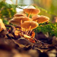 fungus by artmobe