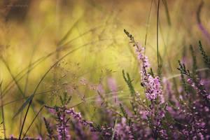 Heide by artmobe