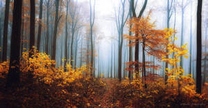 autumn forest by artmobe