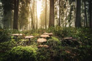 Magic Mushrooms by artmobe