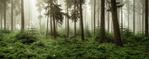 Inside the Forest by artmobe