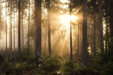 Light in the Woods by artmobe