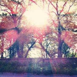 morningwalk by kaoula