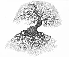 Rooted by Chobek