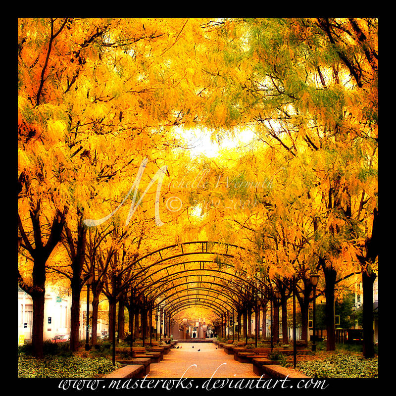 The Golden Path by InLightImagery