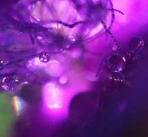 Tiny Bubbles by InLightImagery