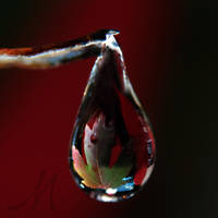Fall Drop by InLightImagery