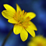 Yellow by InLightImagery