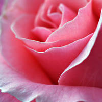 Rose Of Glory by InLightImagery