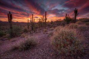 Saguaro Skies by dsnider